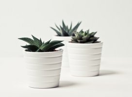 5 Important Things to Consider When Choosing the Lightweight Plant Pots