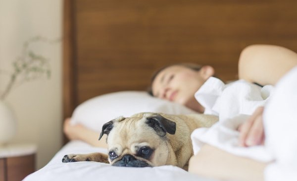 Top 5 Tips to Find Pet Friendly Apartments